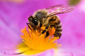 Integrative Bee Therapy BVT